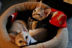 Meet Bela and Oryx who Live in Seoul