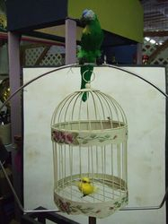 Birds and Bird Cage
