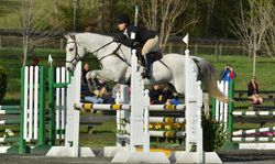 Show jumping at FENCE