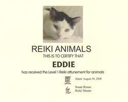 Eddie the Reiki Cat