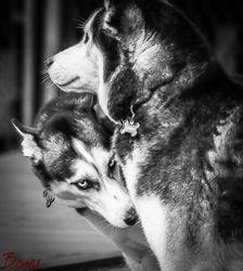 Sebastian & Sasha