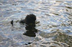 Stina simmar