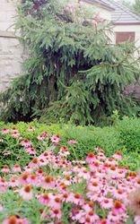 Kaufmann Memorial Garden