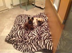 Dexter and Sophia