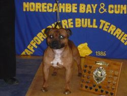 Morecombe Bay & Cumbria Limit Show 2009 Best in Show