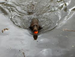 Magua finds water, 2005