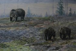 "Grizzle bear and cubs  (24 by 36"" acrylic on board) In Private Collection"
