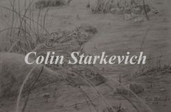 "Short-horned Lizard (7 3/4"" by 12"" pencil drawing) In Private Collection"