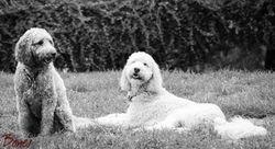 Daisy & Kappy