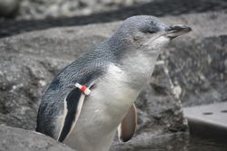 Penguins at Antarctic Centre in Christchurch