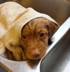 Rowdy's First Bath