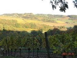Les vignobles du Madiran et St Mont