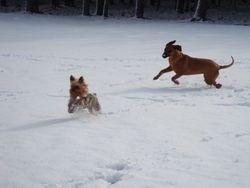 Sadey chasing Bentley