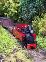 'Foxtrotter' on its train rattling through the wooded linesides