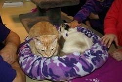 Gremlin & Lailah 2009
