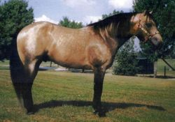 Stone's Sire ~ BTS Country Cowboy