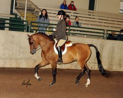 Featured Sale Horse - WCF Ima Gator Too (Marakov+ x Annatasia)