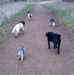 With some of my new friends, Dusty, Toto, Pip and Brodie