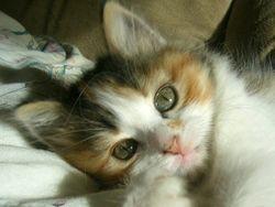 Rosanna as a kitten