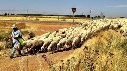 Traffic Jam on the Camino
