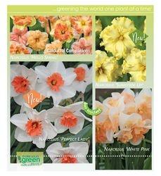 I love Narcissus