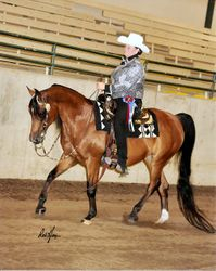Ice Storm Purebred Arabian Open Western Pleasure