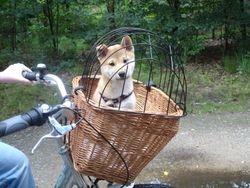 en fietsen maar