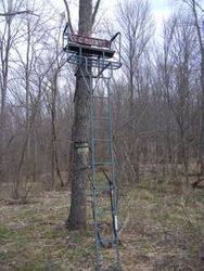 Double tree stand