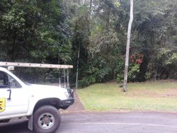 Power Pole Clean Up Before