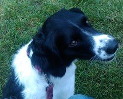 My gorgeous Jessie