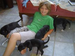 My son playing with the puppies