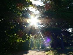 Sun peeking through the trees.