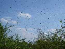 Swarm in mid-air