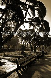 Morning Paddock - Sepia