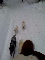 Feb 2011 winter ride