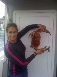 Edible crab! Weymouth diving