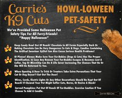 Pet Safety 2016