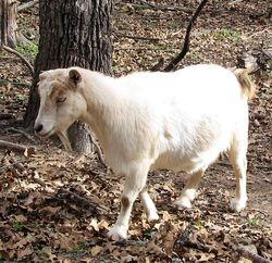 7F Ranch Vidalia MGR# A5581