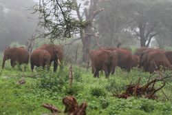 Early morning mist. Meru national park