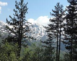 Pinus heldreichii (Bosnian pine) forest.