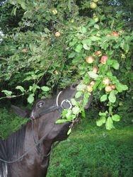 Picking Apples Sept 2011