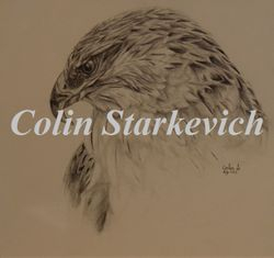 Ferruginous Hawk Portrait (penci & ink on canvas) In Private Collection
