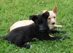 Jasper and Ripley