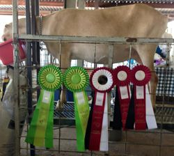 Rosettes and Daisy at SMDGA Show