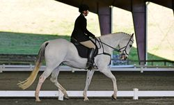 Jack in dressage at FENCE HT