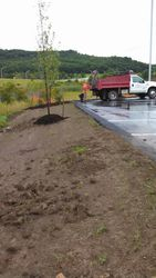 Working on Planting Trees