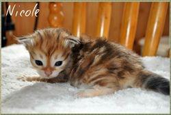 Nicole 3 weeks