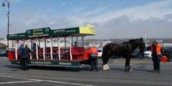 The Horse Trams' New Season