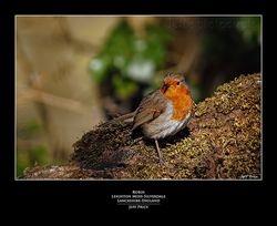 Robin Leighton Moss-Silverdale Lancashire-England