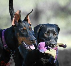 Amalfi & Scout